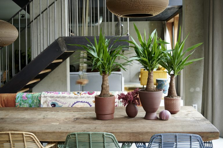 Transform your home into a productive and calming working space with houseplants